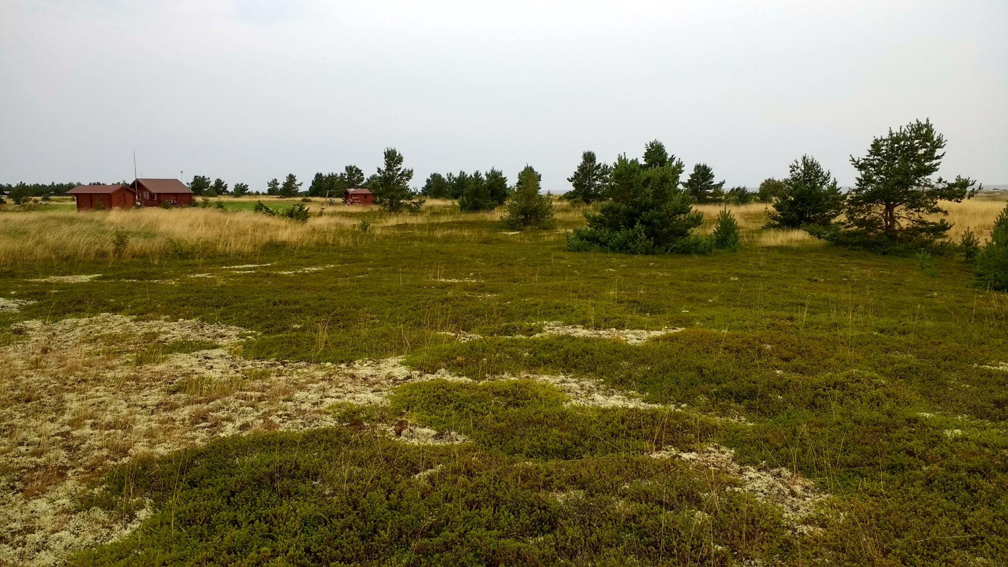 Hurmavalt pehmed kukemarjaväljad. Taamal suvilakrundid. Foto: Kadri Aller