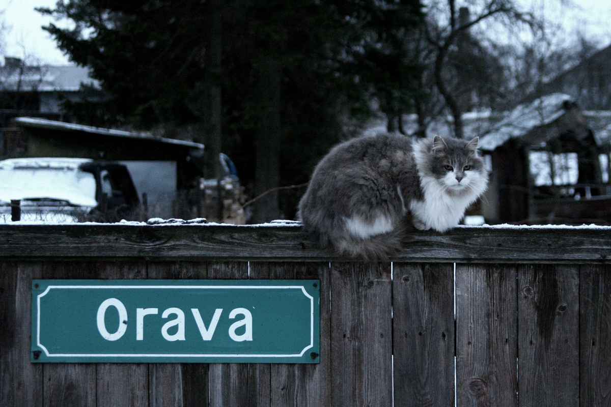Kass Tartus Orava tänaval. Pildistas Lilian Lukka.