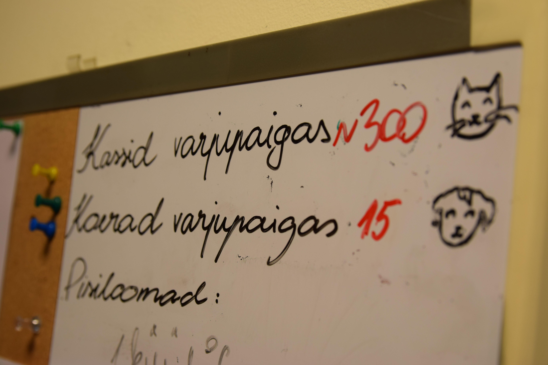 """Triinu Priks: """"Mõned koerad on ise tulnud Tallinna kodutute loomade varjupaika."""""""