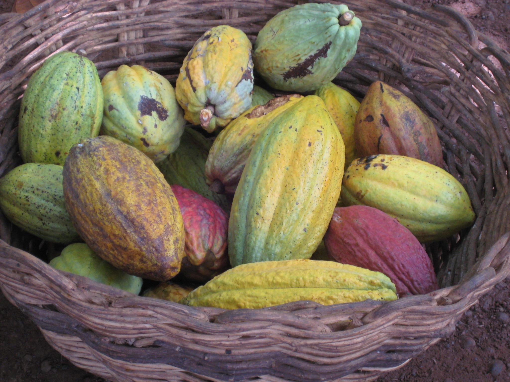 Fazer – põhjamaade vastutustundliku šokolaadi tootmise lipulaev
