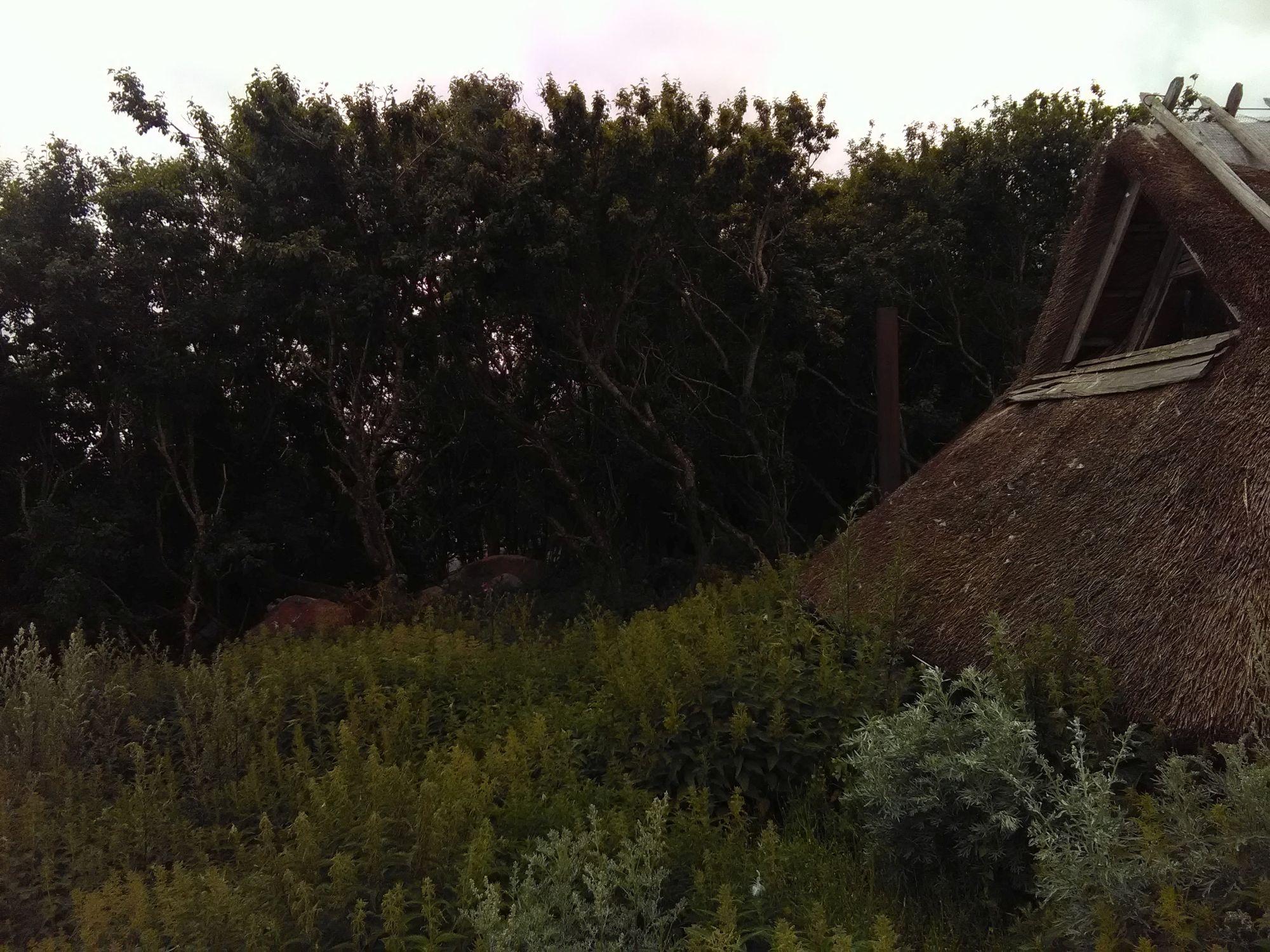 Taastatud kalurionn Suur-Pihlakarel, mille rookatust on puude vahelt näha ka merelt. Foto: Perekond Libe.