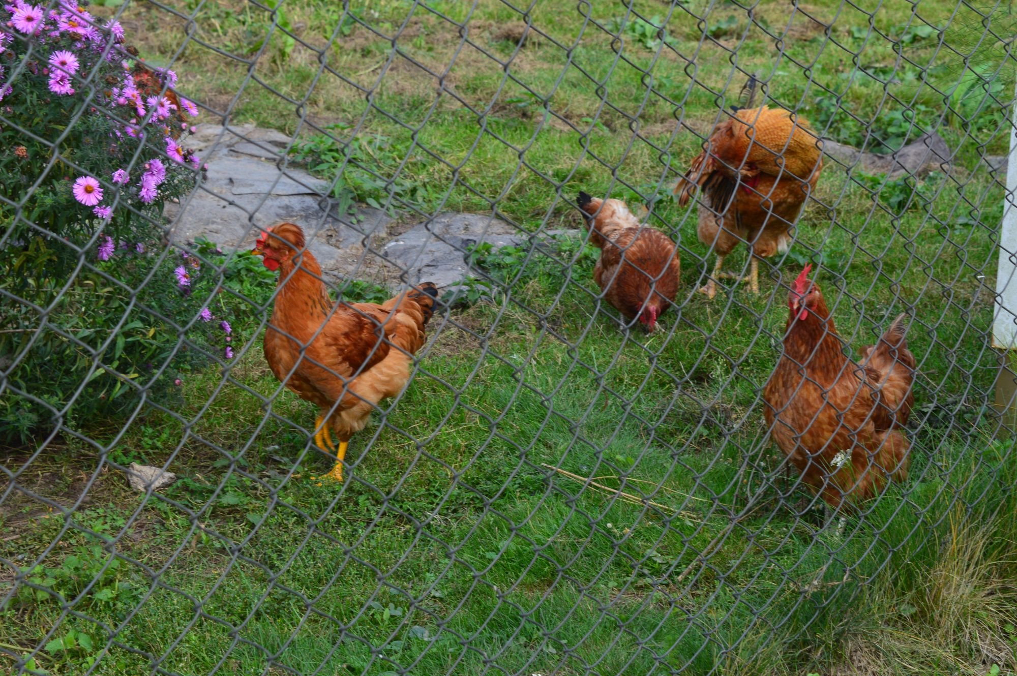 Vabapidamiselt kanad Vilniuses. Pille Lipp