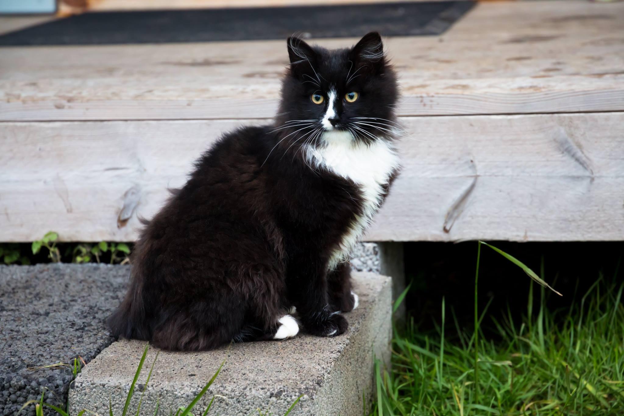 See armas karvakera kippus meile toanaabriks. Foto: Nele Verhovtsova.