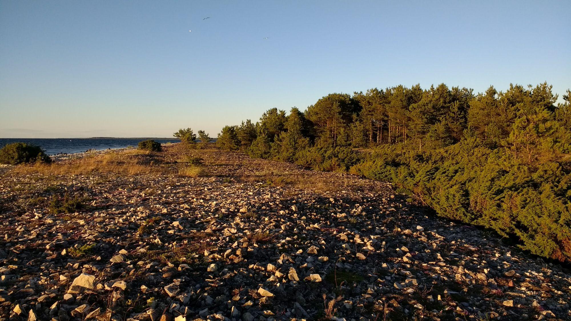 Kiviklibused rannavallid.