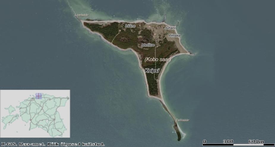 Kolga lahes asuval Koipsi saarel on ajalooliselt olnud igal kaldal randumiskoht, et saareelanikud pääseksid koju ka tormise ilmaga. Kui ühel kaldal mäsleb torm, võib saare teine külg olla üsnagi rahulik. Allikas: Maa-ameti Geoportaal.