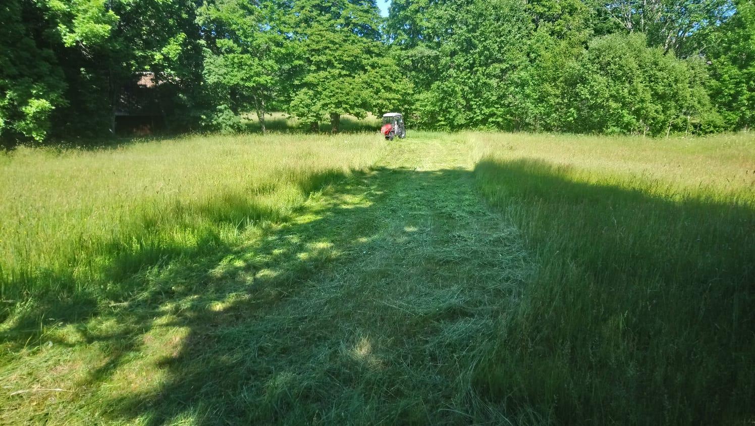 Foto: Liigirikas niit Saaremaal. Keskelt lahku niitmine jätab loomadele võimaluse masinate eest taandumiseks/Tõnu Talvi