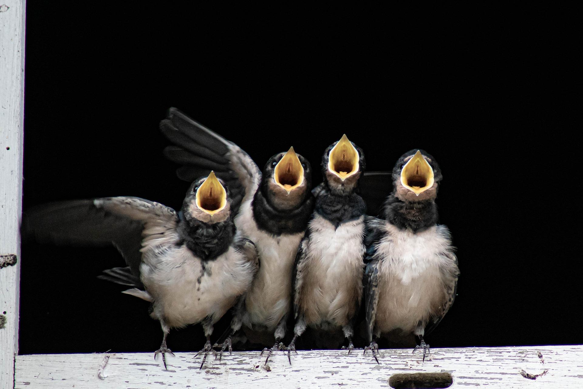 Kas on linnukesel muret?
