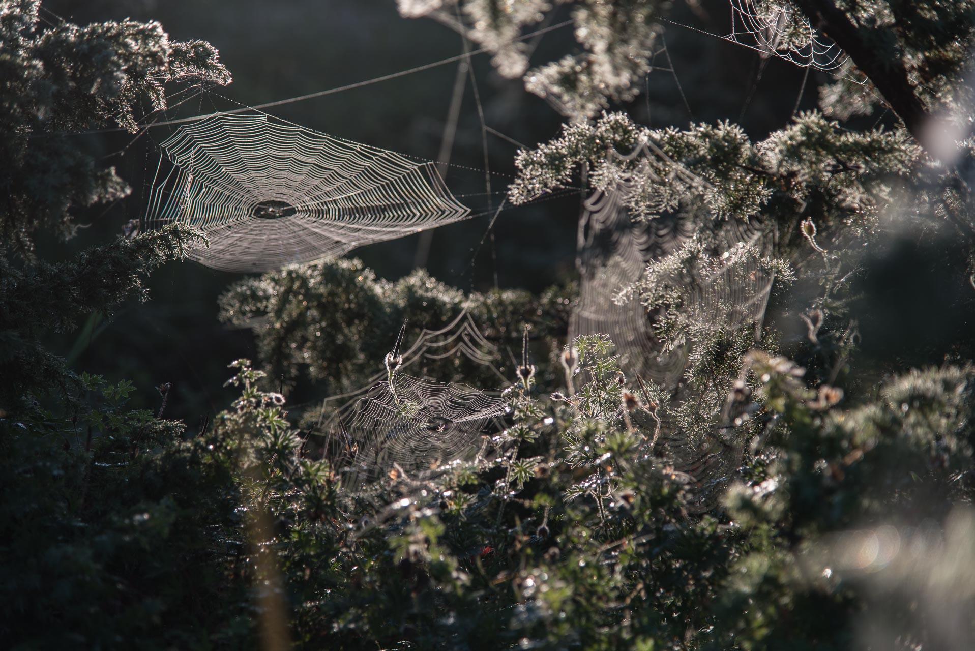 Muinasjutuhõnguline saarehommik. Foto: Ülo Veldre
