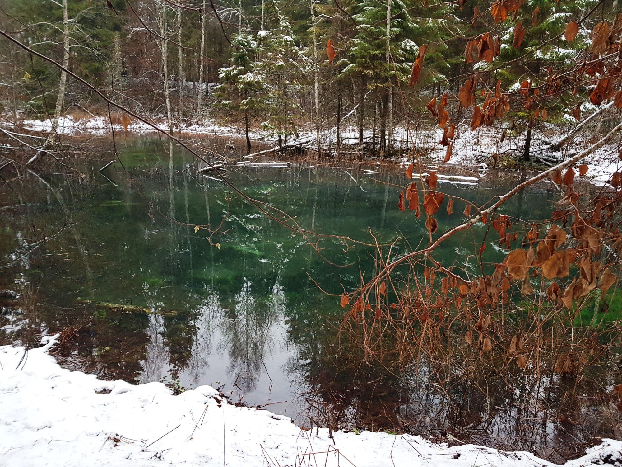 Saula Siniallikad, mõtlik hiiepaik talvevaikuses