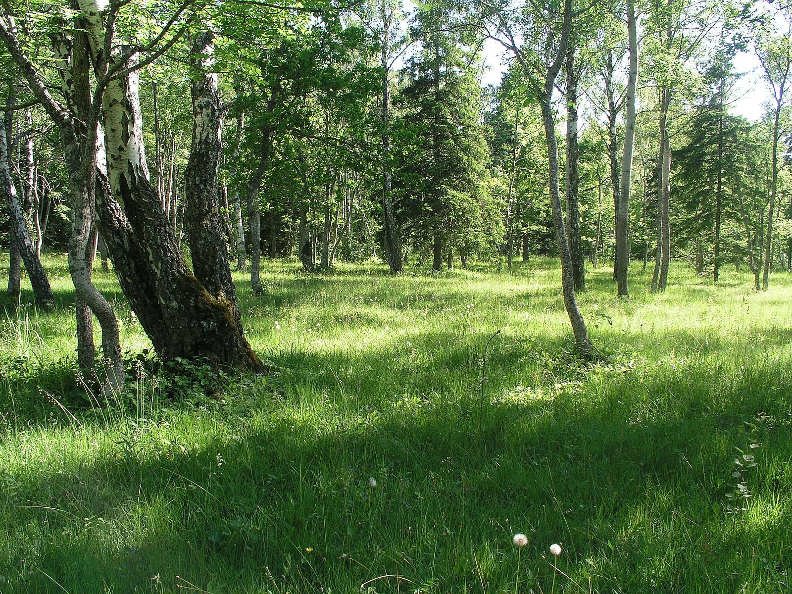 Tagamõisa puisniit Saaremaal. Pildistas Valdo Kuusemets.