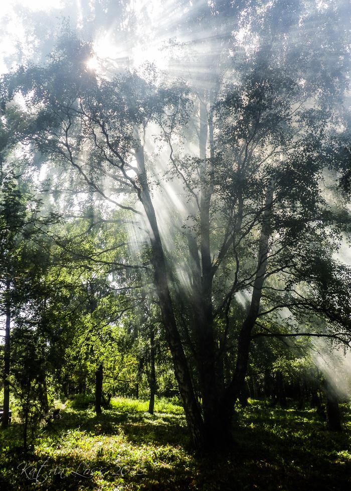 Talguliste poolt korrastatud puisniit. Foto: Katrin Loss