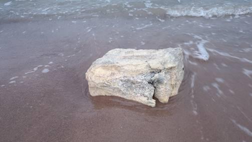 Hiiumaa rannast leitud absordent.